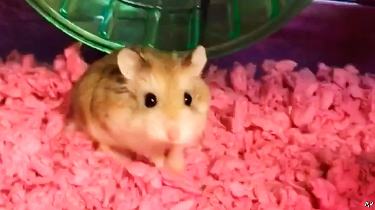 A hamster is the latest victim in the row over emotional-support animals