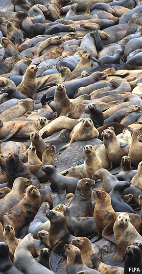 Disease transmission: Seals of doom