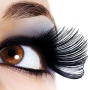 The origin of eyelashes