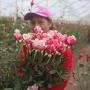 Colombian flower growers