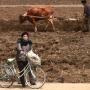 North Korea's economy