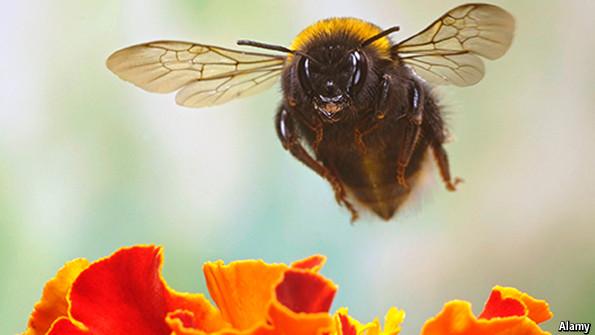 Entomology: It's gotta bee me