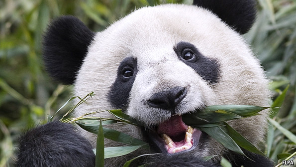Bioengineering: Panda poop power | The Economist