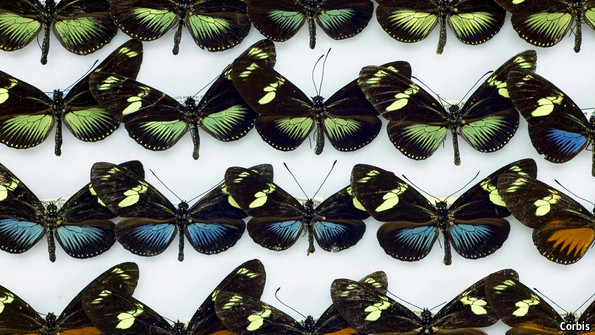 Evolution: Butterfly ball | The Economist