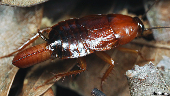 Cockroach hygiene: Faecal position