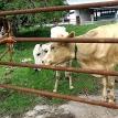 Stuck in cattle class