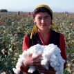 In the land of cotton