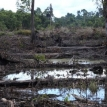 A sorry record on deforestation