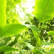 How plants exploit sunlight so efficiently