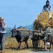 Thaksin's harvest