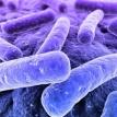Bacteria motels
