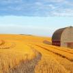 Boondoggle harvest