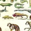 The origin of species?