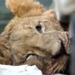 Sad for Simba