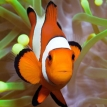 Finding Nemo's role