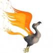 From dodo to phoenix