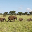 Big game poachers