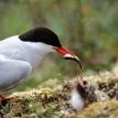 Tern limits