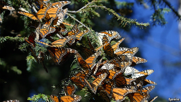 North America's fauna and flora: Butterfly effect | The