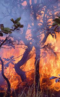 Burning issues | The Economist