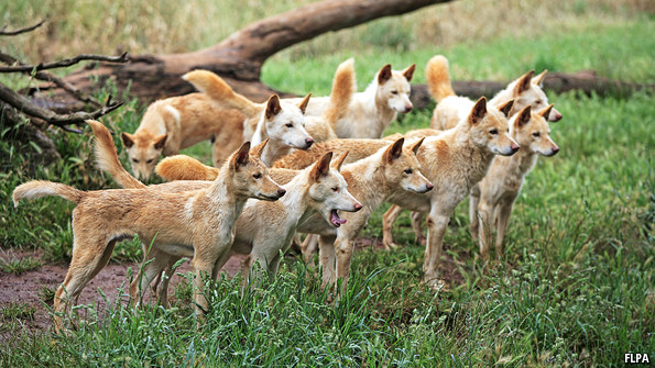 The Company Of Wolves The Economist