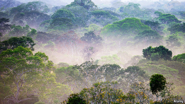 The Amazon rainforest: Cutting down on cutting down | The