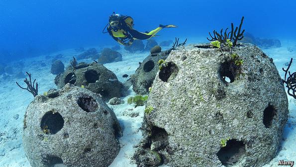 Artificial Reefs Watery Dwellings The Economist