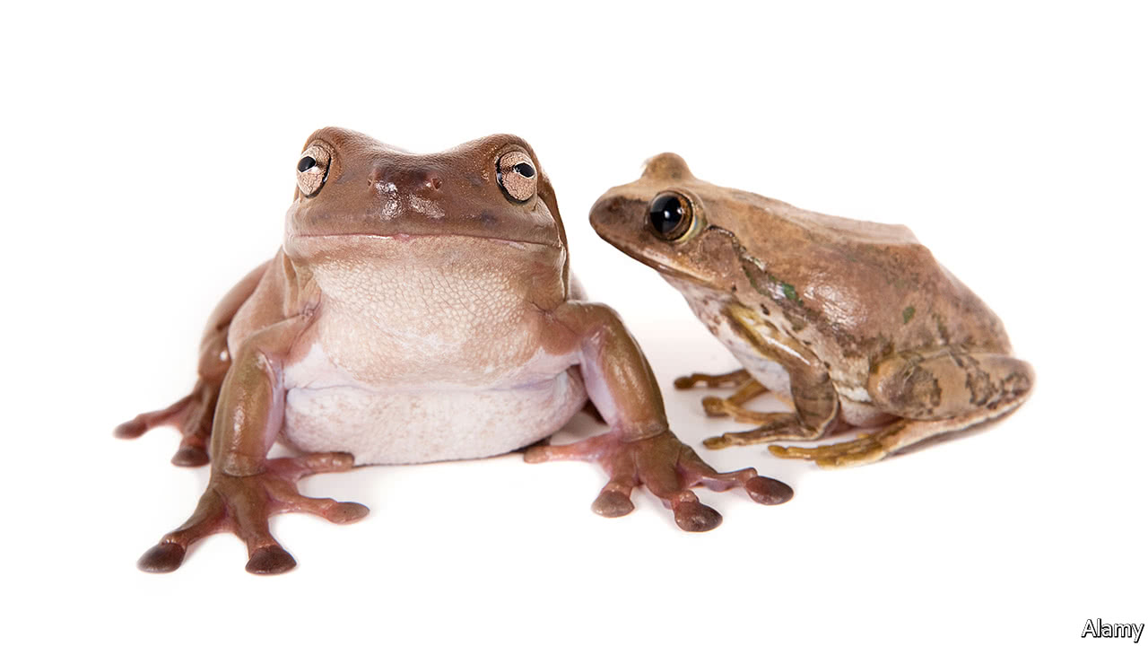 Is the post-dinosaur world the Age of Frogs?