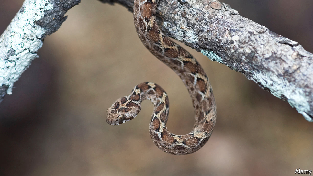 Many antidotes to snake venom do not work as well as they might