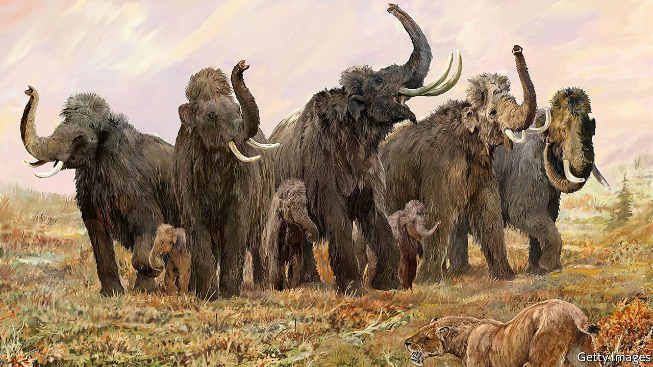 Mammoth society seems to have been like that of modern elephants