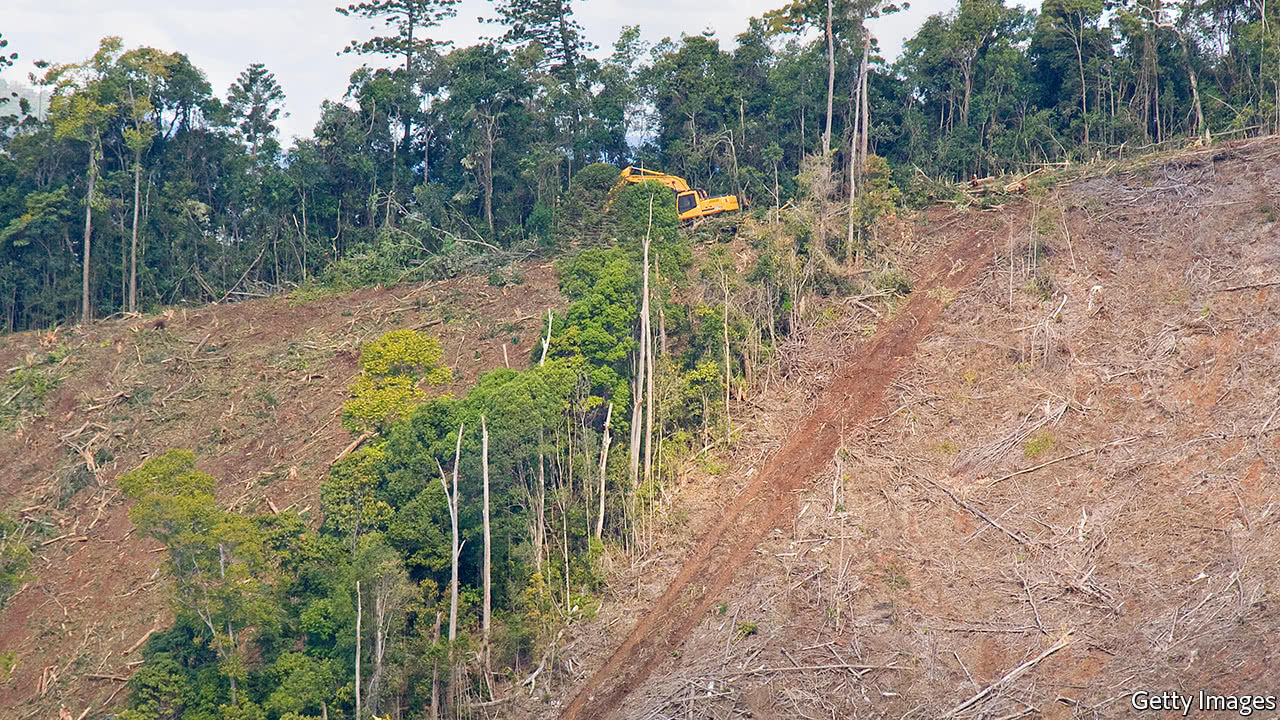Queensland is one of the world's worst places for deforestation
