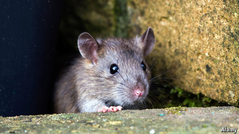 Do rats have souls?