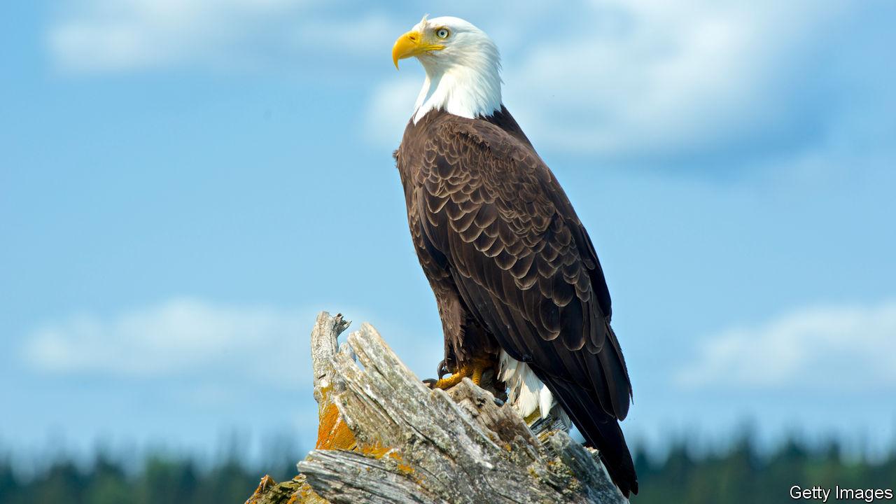 How The Bald Eagle Soared Again The Economist Explains