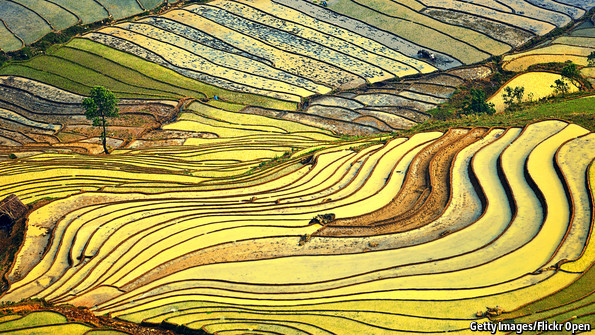 A bigger rice bowl: Another green revolution is stirring in