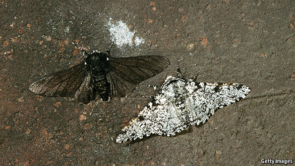 Peppered moths | The Economist