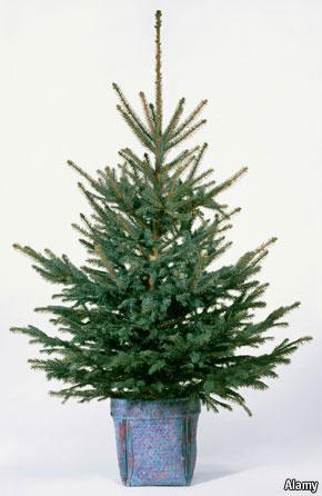 print edition europe - Small Real Christmas Trees