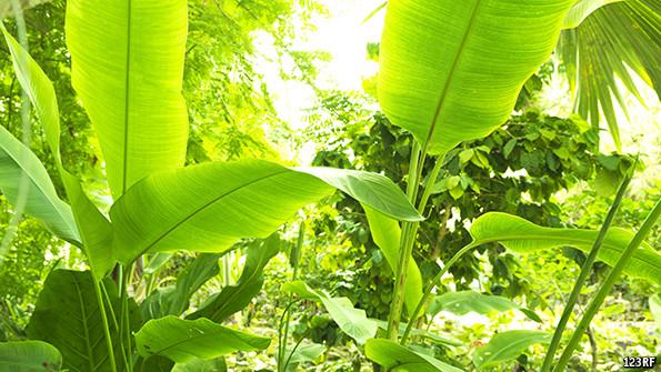 How plants exploit sunlight so efficiently - The Economist explains