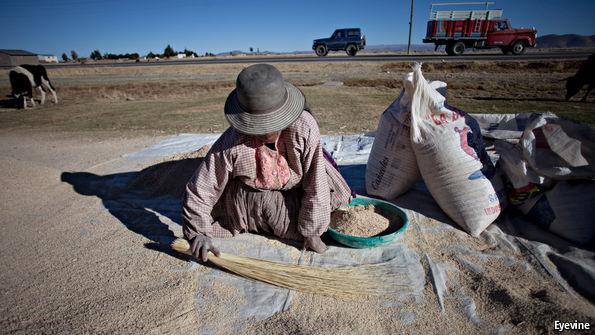 Why the price of quinoa has fallen