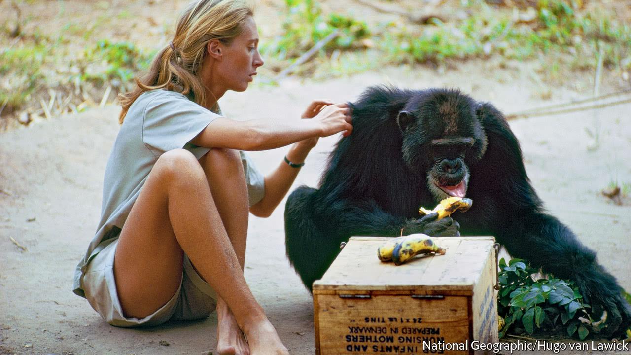 gorilla my love summary