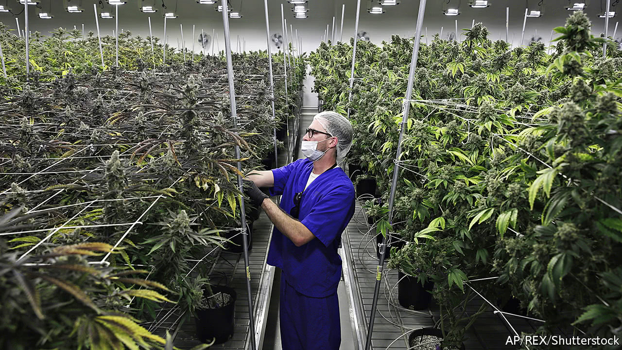 The price of cannabis is falling, suggesting a supply glut