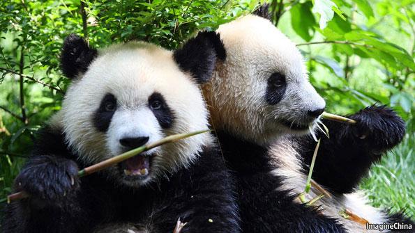Panda bears - Shorting China