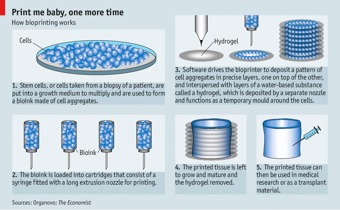 bio printing Printing the future of therapeutics in 3d  aspect biosystems ltd is a privately held biotechnology company operating at the leading edge of 3d bioprinting and .