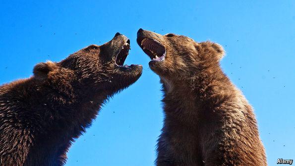 Bear on bear