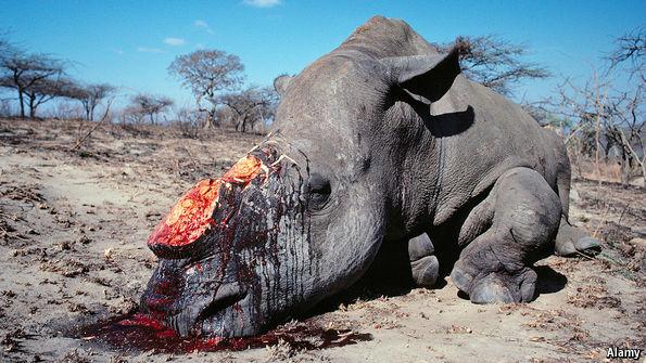 Grim pickings - Wildlife conservation