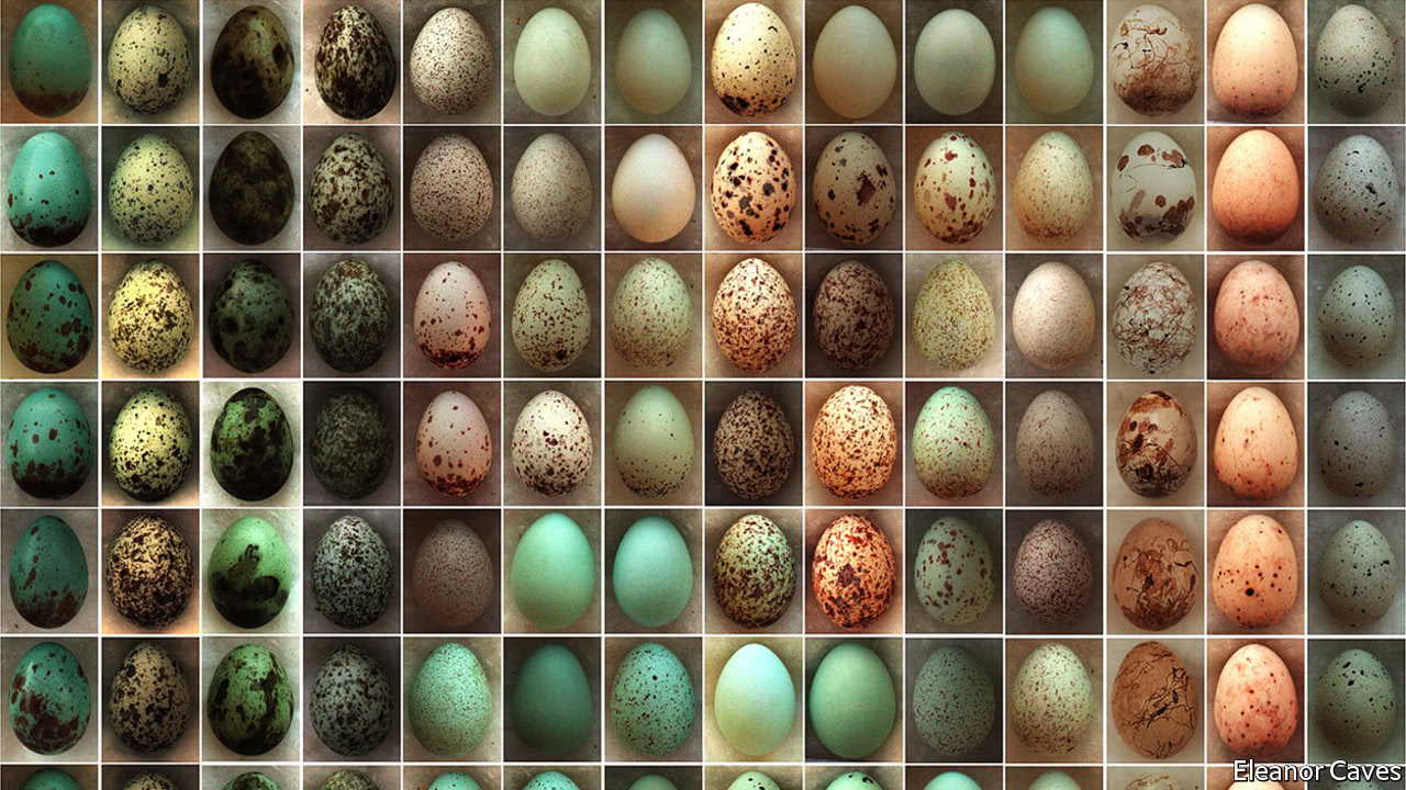 How the eggshell got its spots