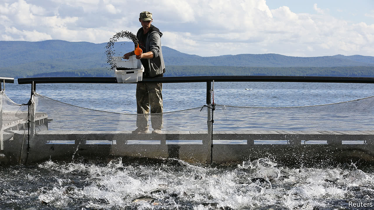 antibiotic resistance in fish farms is passed on from fish food