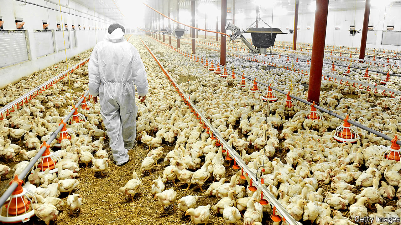 POULTRY FARMING PDF DOWNLOAD