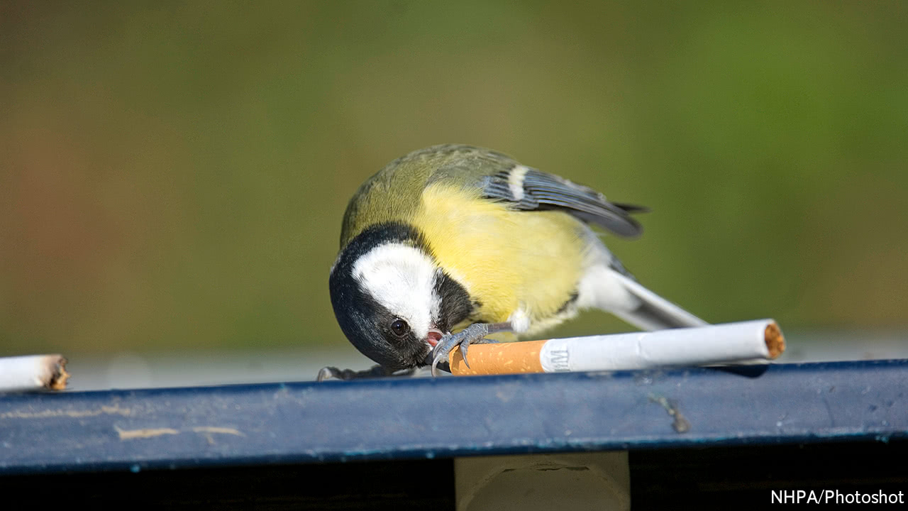 some birds use discarded cigarettes to fumigate their nests birds
