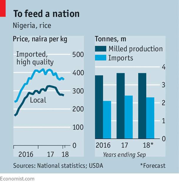 Nigeria Hopes High Tariffs Will Make It Grow More Rice Grow Your