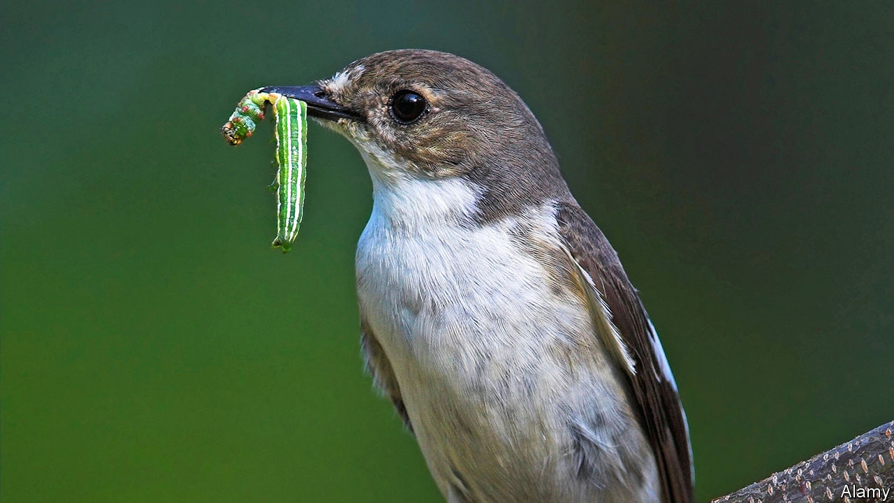 How some birds are responding to climate change